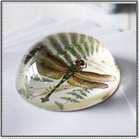 Dome-Shape-Crystal-Dragonfly-Paperweight-For-Wholesale.jpg_200x200